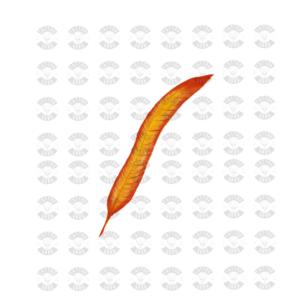tatouage phoenix plume