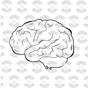 Tattoo brain linework