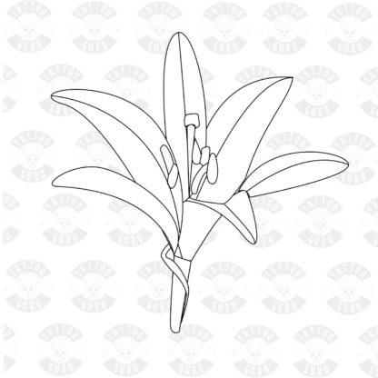 Tattoo lilies