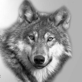 Tattoo Wolf